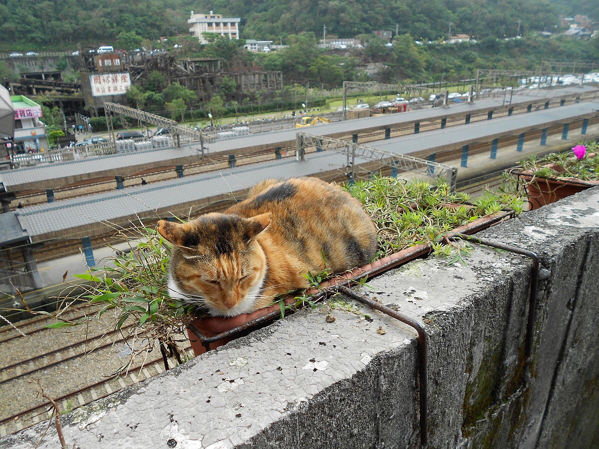 Houtong: the old Taiwanese mining village saved by cats.